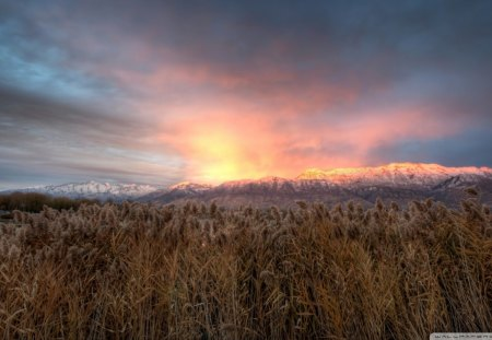 mt. timpanogos in afterglow - sunrise, reeds, mountains, clouds