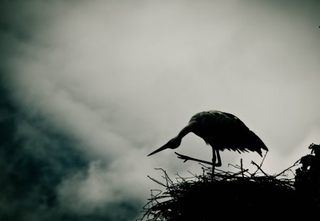 Stork - white, tree, high, day, nest, stork, bird, evening, break of day, fog, twilight, mist, little, smoke, dawn, dusk, haze, break, black