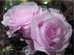 ♥ Romantic Lightpink Roses ♥