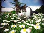 daisy looking cat horoscope