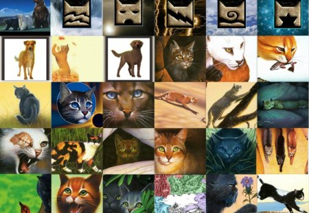 WARRIORS, SEEKERS, AND SURVIVORS - kallik, blackstar, mistystar, onestar, tigerstar, dogs, breezepelt, apprentices, animals, lusa, bramblestar, jayfeather, pets, bears, ashfur, tawnypelt, clans, raggedstar, crookedstar, crowfeather, leafpool, lionblaze, dark forest, bluestar, sandstorm, hawkfrost, graystripe, purdy, tallstar, cats, firestar, seekers, survivors, collage, brightheart, leaders, medicene cats, elders, hollyleaf, barkroot, leopardstar, spottedleaf, cinderpelt, kits, nature, dovewing, brokenstar, yellowfang, ujurak, warriors, lucky, millie, littlecloud, ivypool, squirrelflight, toklo