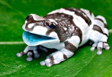 Milk Frog  - digital, beautiful, abstract, art