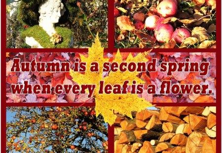 ♥ Autumn Nostalgia ♥ - autumn, apples, wood, abstract, nostalgia, collages, leaves
