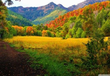 Сентябрь разбрызгал золото по кронам, листва пахнет терпким вином.  1156173-bigthumbnail