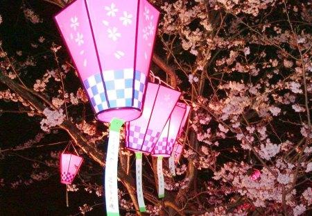 Paper Lanterns - pink, paper, lanterns, nice