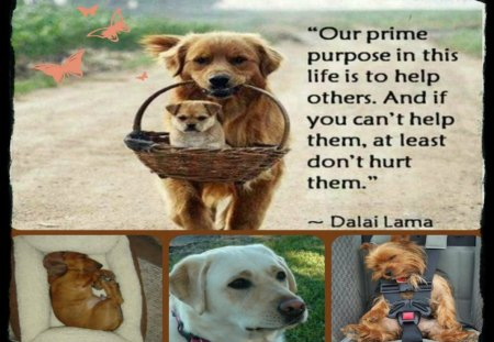 ~~We Care For All ~~ - dogs, quote, animals, collage