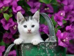 cute garden kitty