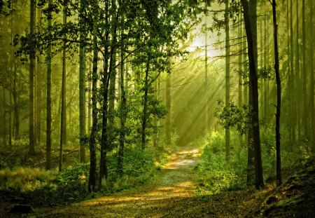 Sunny Forest Forests Amp Nature Background Wallpapers On