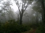 Dark Misty Woods