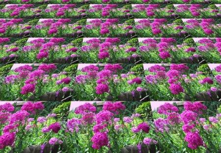 ♥      ✿ ✿    ƒℓσωєя  Carpet    ✿ ✿      ♥ - flowers, purple flowers, summer, abstract, collages, flower, carpet, flower carpet