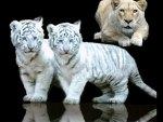 Little Big cats