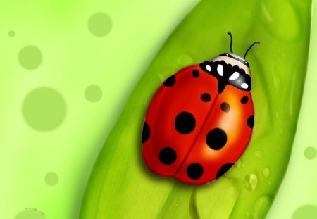 The Red Black Dotted Bug - bug, dotted, art, red