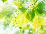 Transparent Globe, green leaves and sparkling sunlight