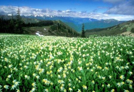Flower Field White Background