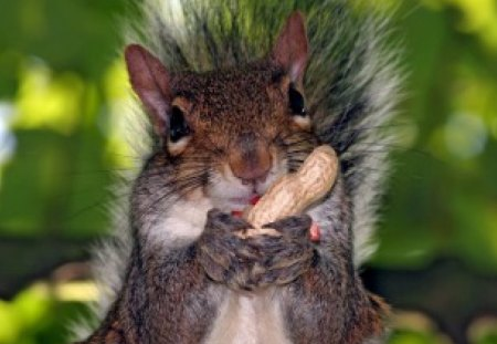 squirrel chewing his nutz squirrels animals background