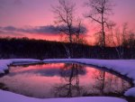 Stunning Winter Forest Twilight