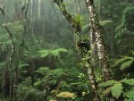 Damp Misty Rainforest
