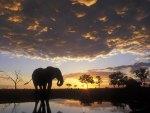 elephant in the sun set