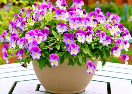 Pansy perfect for Roxane - flowers, pansies, white, fuschia, basket, table
