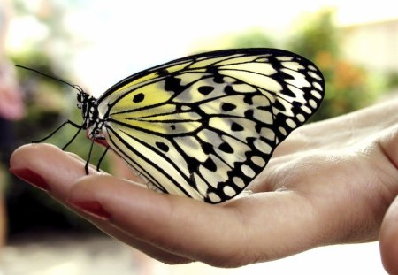 gift for Cherie - hand, beautiful, gift, butterfly
