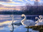 WHITE SWANS LAKE