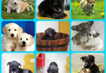 CUTE DOGS - dogs, abstract, collage, puppies