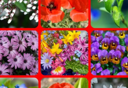 FLOWERS - flowers, pretty, abstract, collage