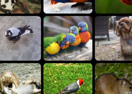 NATURE - animals, birds, collage, nature
