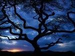 Tanzania Tree