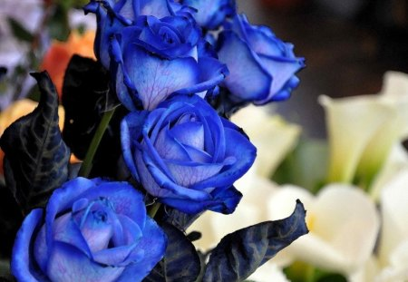 SISTERS IN BLUE - flowers, roses, blue roses, blooms