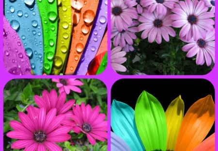 COLOURFUL - flowers, colourful, collage, colours
