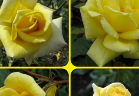 YELLOW ROSES - pretty, roses, collage, yellow