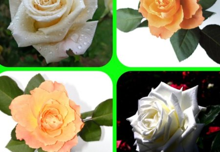 ROSES - flowers, collage, four, roses