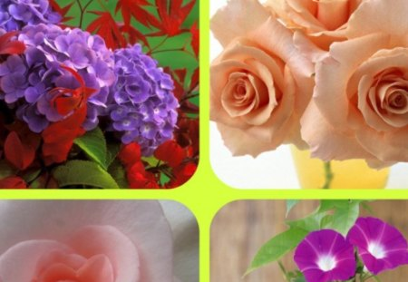 FLOWERS - flowers, roses, morning, glory
