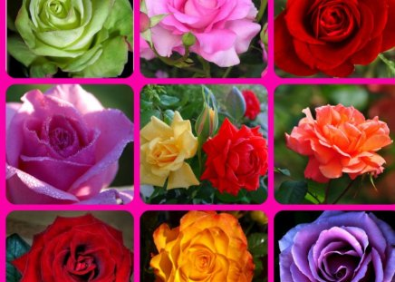 THE ROSES - flowers, pretty, roses, collage