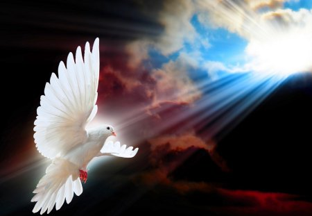 SHINE a LIGHT for PEACE - dove, rays, sun, sky, bird flight, peace