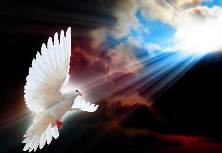 SHINE a LIGHT for PEACE - rays, peace, sky, bird flight, dove, sun