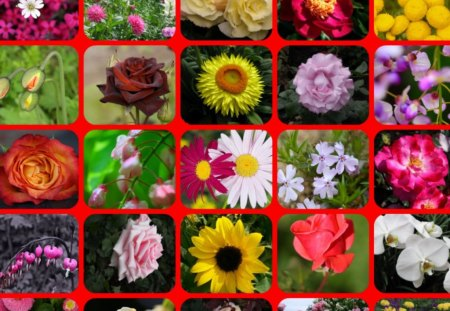 TWENTY FIVE FLOWERS - flowers, pretty, collage, colours