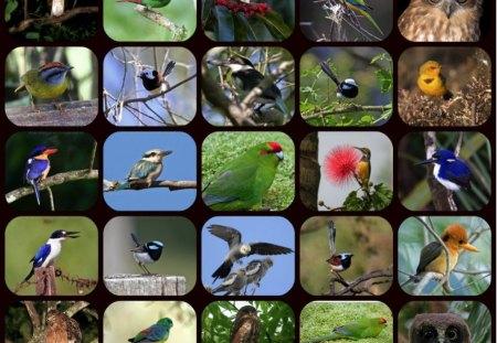 BIRDS BIRDS - pretty, birds, collage, nature
