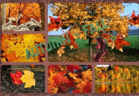 ~~~AUTUMN/FALL~~~ - collage, trees, nature, autumn