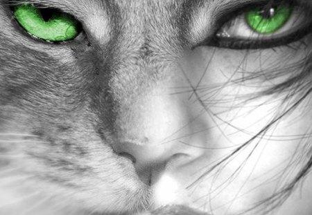 Those green eyes - green, woman, cat, eyes