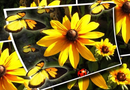 ♥      ~❁~   Summer Flowers   ~❁~      ♥ - butterfly, summer, abstract, collages, sun, flower, yellow, ladybug, yellow flowers, butterflies