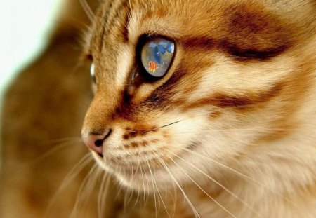 The Most Beautiful Eyes Cats Animals Background Wallpapers On Desktop Nexus Image 1169047