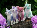 colors and cats