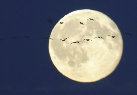 OVER THE MOON - space, blue, birds, white, evening, silouettes, full moon, moons, flight