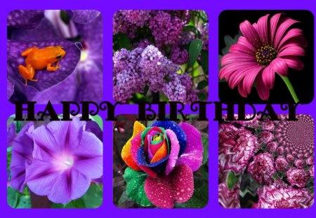 FOR DEAR PURPLE-HAZE - birthday, happy, dear, friend