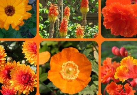 FOR DEAR BLANCHE, GUOGUOLE - flowers, orange, friends, collage