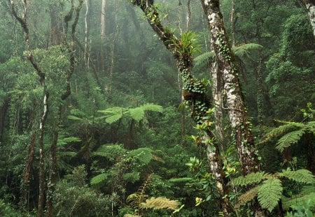 Amazon... - rainforest, forest, amazon, jungle, thick, dense