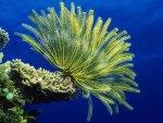Coral Reef Sea Anemones