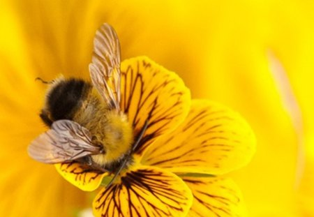 bee - bee, pollen, flower, honey